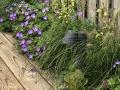hovenier-mooi-tuinen-dordrecht-IMG-3921