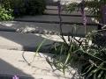hovenier-mooi-tuinen-dordrecht-IMG-3971