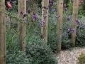 hovenier-mooi-tuinen-dordrecht-IMG-3995